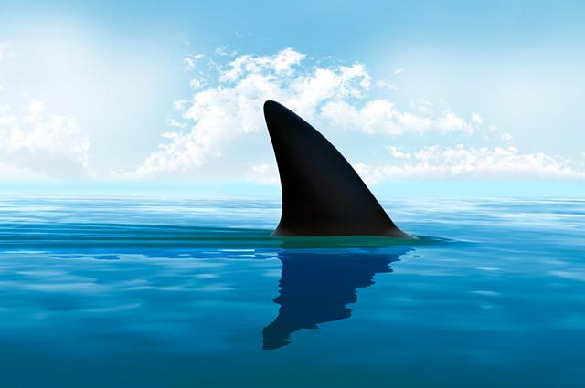 É possível sobreviver ao ataque de tubarão, por isso é indicado não agir passivamente