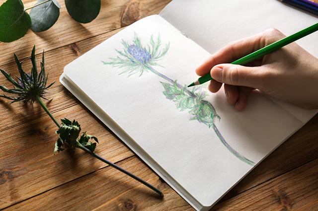 10 Desenhos Para Desenhar Fácil Estudo Kids