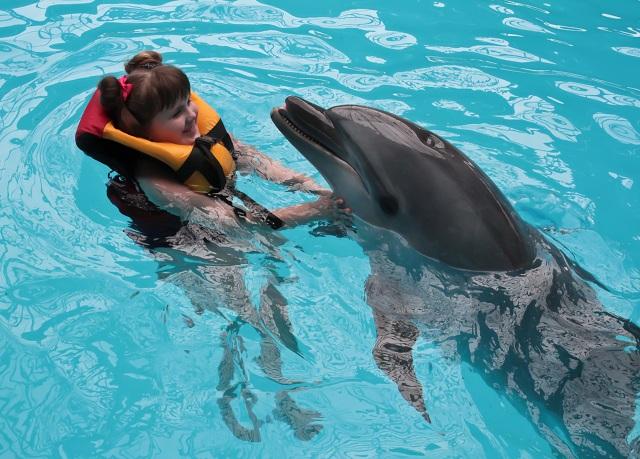Golfinho interagindo com menina