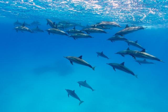 Bando de golfinhos rotador