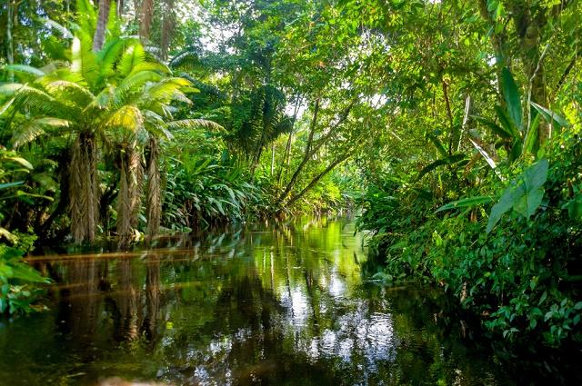 Rio e plantas