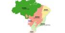Biomas brasileiros: cada tipo e características