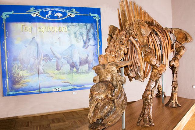 Fóssil de um Elasmotherium sibiricum