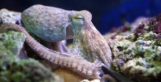 Moluscos: o que são e características