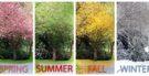 Seasons of the year: Estações do ano em inglês