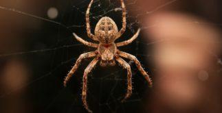 Aranha: Características, tipos e importância
