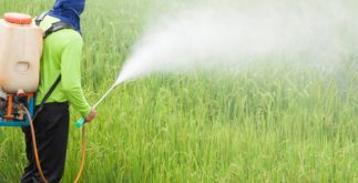 Agrotóxicos: o que são, tipos e finalidade