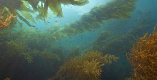 Algas: características, reprodução e importância