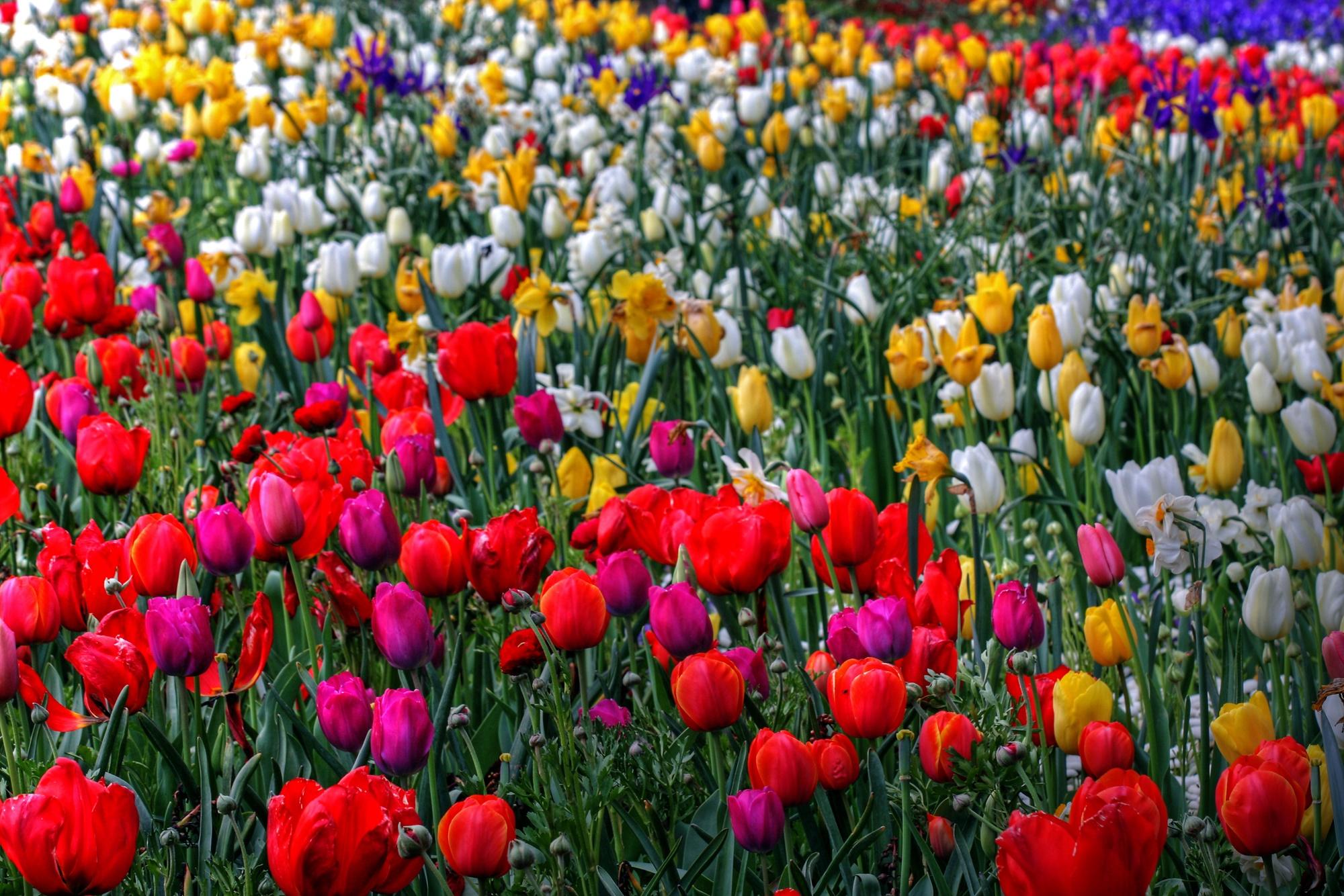 Flores da Austrália