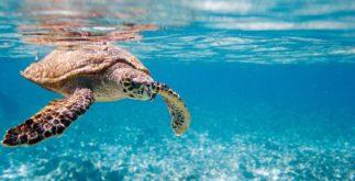 Os animais marinhos